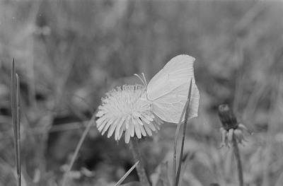 Nahaufnahme eines Schmetterlings auf einer Blume