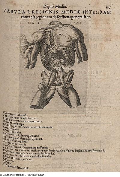 Image from object titled menschlicher Brustkorb, Zwerchfell und Becken