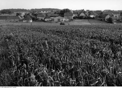 Umgebung von Wolfsburg; Neindorf, Dorfansicht aus Entfernung, Blick über´s Kornfeld