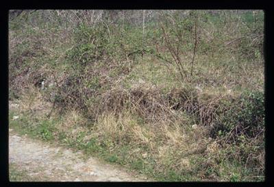 Image from object titled Barka - Naselje z ostanki gradu Tukelče, fotografija