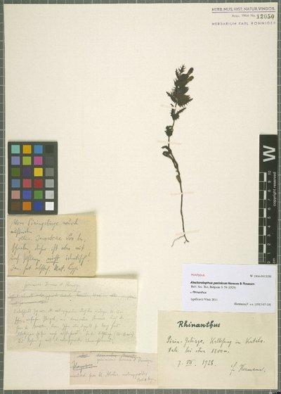 Rhinanthus L.
