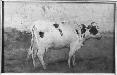 Schilderij met als voorstelling een witte koe in een weiland.