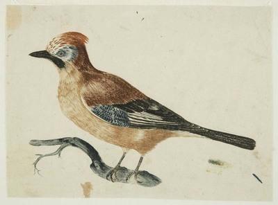 Image from object titled Johannes Teyler vond een nieuwe techniek uit waarbij hij verschillende kleuren drukinkt aanbracht op een koperplaat en deze in een keer afdrukte. Hij gebruikte voor zijn experimenten composities...