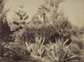Particolare del giardino di villa Tasca a Palermo