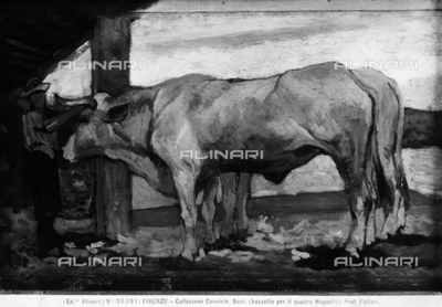 Oxen (study for the Magnelli painting), by Giovanni Fattori, formerly part of the Carnielo Collection, Florence, Tuscany