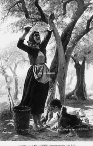 Image from object titled Olive Picking, painting by Luigi Bechi, private collection, Florence