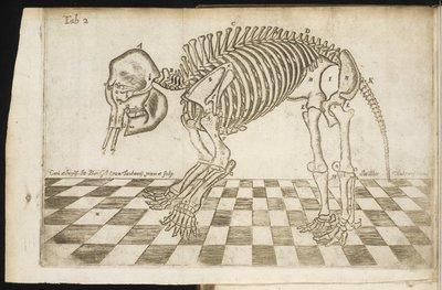Osteographia Elephantina, 1713