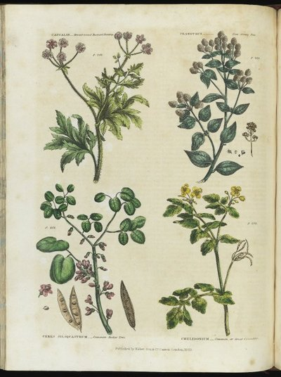 The universal herbal; or, botanical, medical, and agricultural dictionary. Containing an account of all the known plants in the world, arranged according to the Linnean system ... With the best methods of propagation, and...
