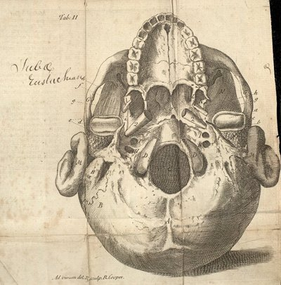 Image from object titled Medical essays and observations; Human skull illustrating the lower jaw