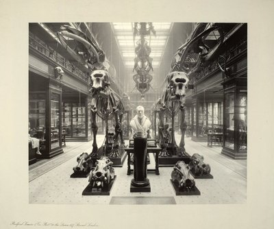 Anatomy Museum in the University of Edinburgh Medical School, Teviot Place
