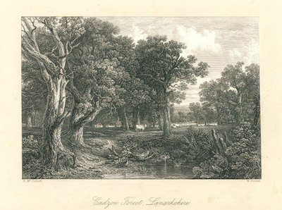 Engraved picture of Cadzow Forest by W. Forrest after H. McCulloch; Cadyow Castle; Cadzow Forest, Lanarkshire