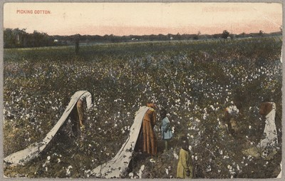 Image from object titled Picking cotton