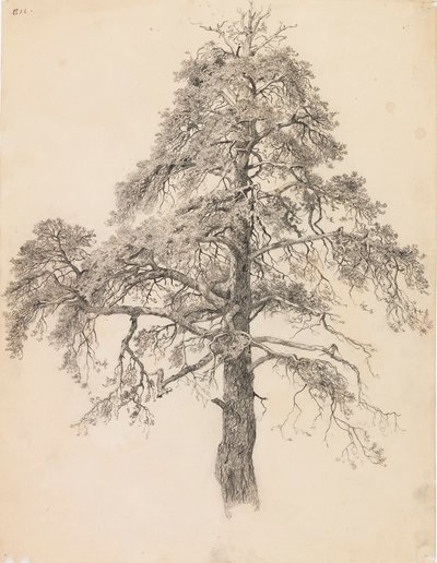 Image from object titled Pine Top