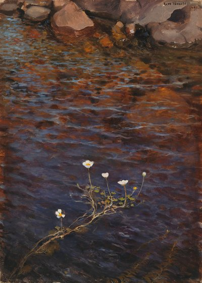 Image from object titled Pond Water Crowfoot ; Pond Weed