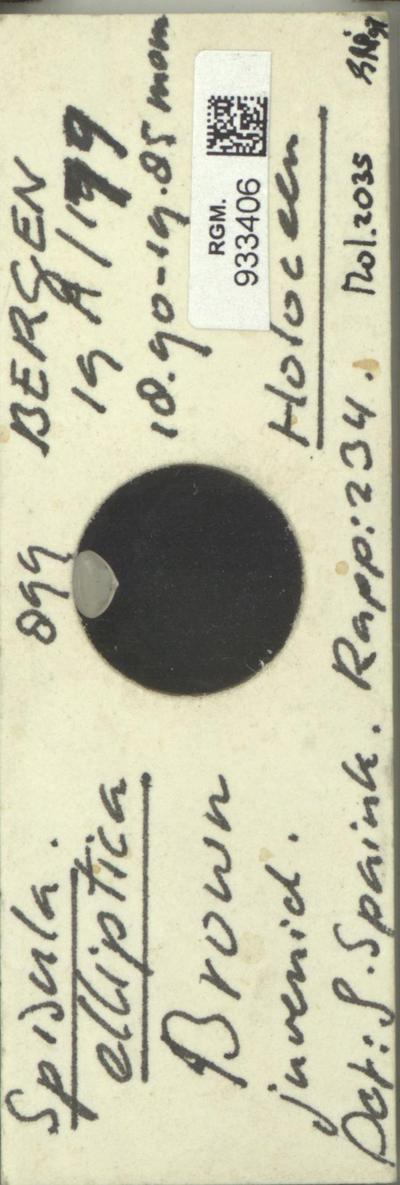 Image from object titled Spisula elliptica (Brown)