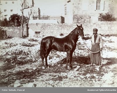 Palestiner på sin hest fotografert i Gaza by