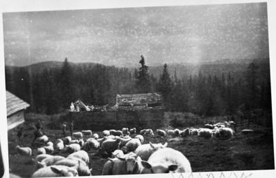 Image from object titled Vollumsætra i Kolbualmenninga ca