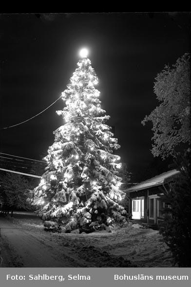 """Image from object titled Enligt fotografens noteringar: """"Julgran vid elektrisk belysning på kvällen."""""""
