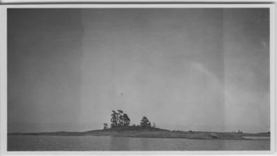 'Biologiska föreningens utfärd till Läckö och Ekens skärgård: ::  :: Fiskgjusebo i tall. Vy över ö med tallträd, från sjön. ::  :: Se fotonr. 3242-3254, 3255, 3256-3259, 3260-3285 samt 3889-3894.'