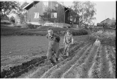 En TGOJ-anställd hemma på sin gård med sin familj vid handplogen. Trafikaktiebolaget Grängesberg-Oxelösund Järnvägar.