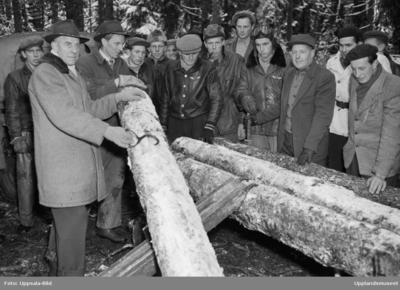 Män i skogen, Uppland, december 1952
