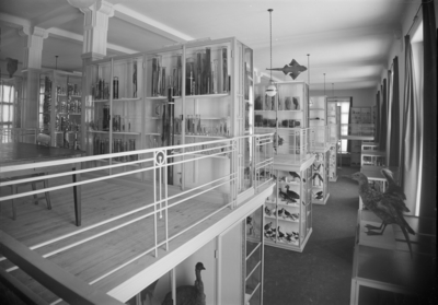 Fågelmontrar, Zoologiska institutionen, Uppsala 1917