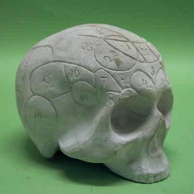 Model menselijke schedel