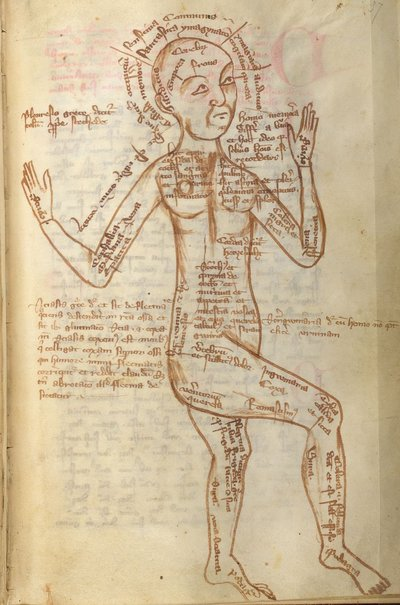 Image from object titled Man from BL Arundel 251, f. 37