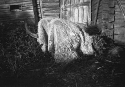 """Image from object titled """"Nuutin-Putti"""" eli nuuttipukki, olennolla on häntänä saunavihta"""