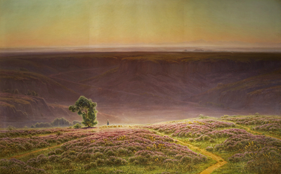 Heather in Bloom - morning