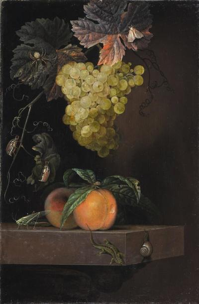 Image from object titled Still Life with Fruit, Lizard and Insects