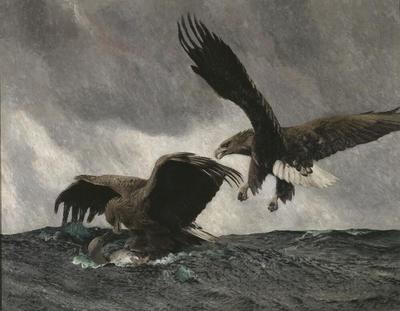 Image from object titled Sea Eagles