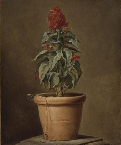 Image from object titled A Potted Plant