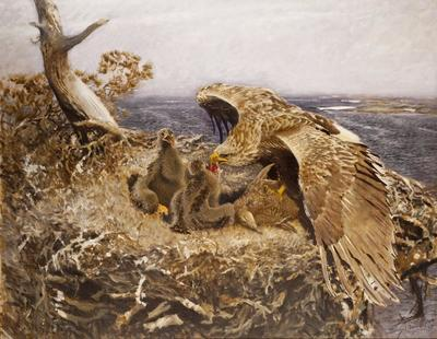 Image from object titled Sea Eagle's Nest
