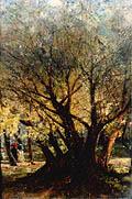 Оливы в Ментоне. Франция. (Оливковые деревья в Ментоне, Оливковая роща в Ментоне); Olives in Menton. France. (Olive-trees at Menton. Olive Grove at Menton)