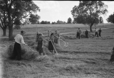 Image from object titled Migonių piliakalnio ir papėdės gyvenvietės (Kaišiadorių r.) tyrimų dalyviai grėbia šieną kolūkio laukuose