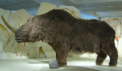 Image from object titled Woolly rhinoceros model