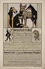 Dobermann-Pinscher Club-Match