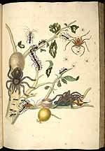 Guave, diverse spinnen en insecten en een kolobri
