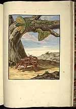 Wandelend blad en bosrat