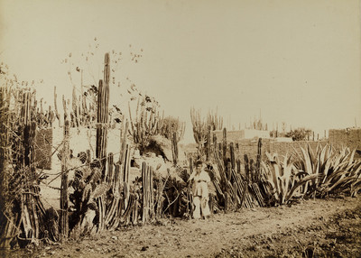 Image from object titled No. 226. Cactus Fence in Salamanca, Mexico.