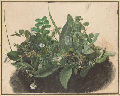 Image from object titled Das kleine Rasenstück