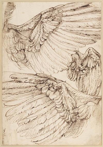 Anatomische studie van vleugels
