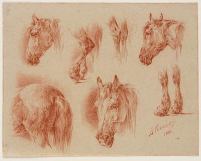 Zeven studies van een paard