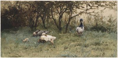 Eenden op een grasveld
