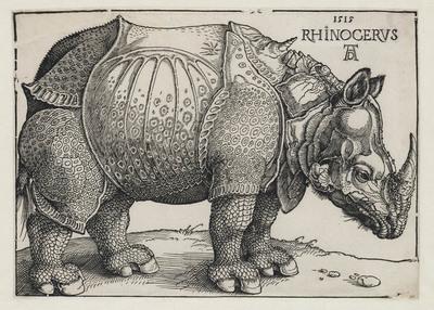 Image from object titled Neushoorn (rhinoceros)