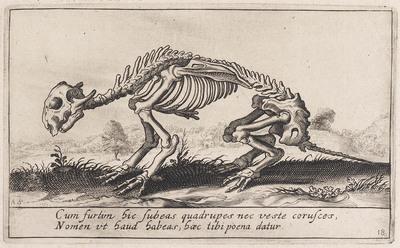 Skelet van een dier