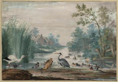 Watervogels in en bij een sloot