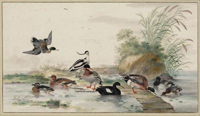 Watervogels in en bij een plas