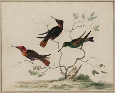 Drie kolibri's in een boompje